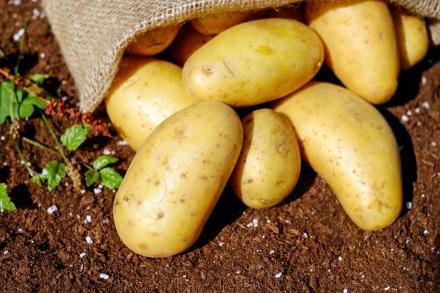 plant-food-harvest-produce-vegetable-garden-548417-pxhere.com